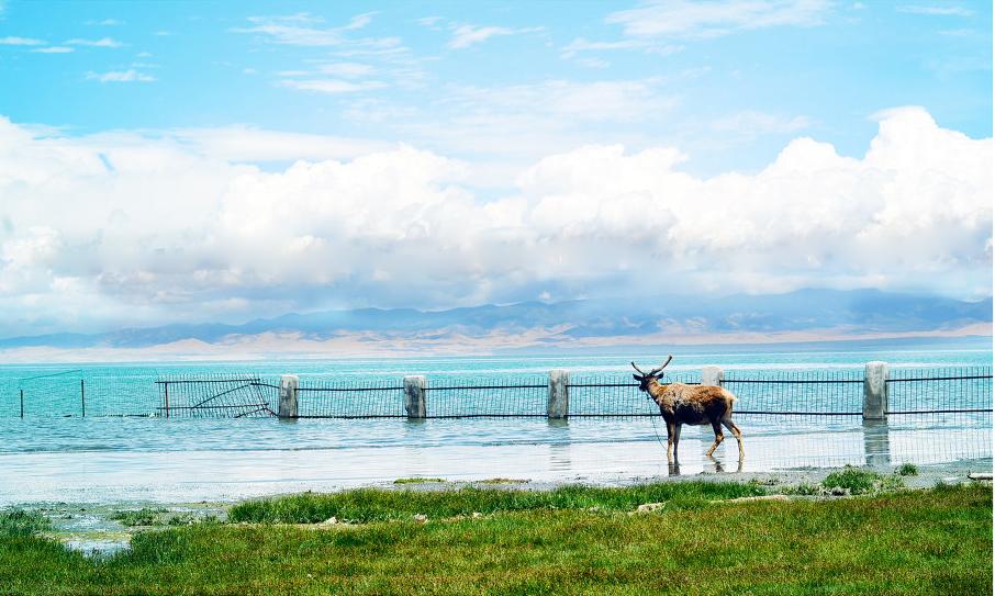 青海湖摄影