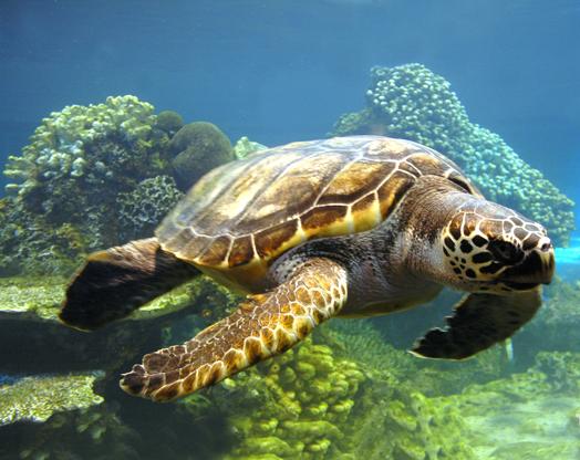 马尔代夫尼卡岛旅游介绍